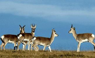 野生动物保护立法的目的_野生动物宪法-法律知识-好律师网